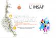 Marathon Des Sables – L' INSAF